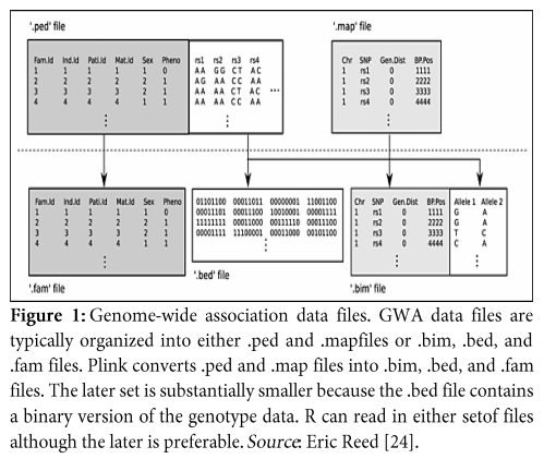An Overview of Genome-Wide Association Study for Genetics